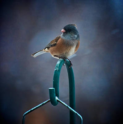Photograph - Junco by Britt Runyon