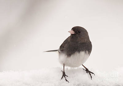Winter Scene. Winter Landscape. Snow Landscape. Black And White. Birds Photograph - Junco In The Snow by Cheryl Baxter