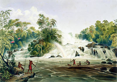 South American Jungle Drawing - Junction Of The Kundanama by Charles Bentley