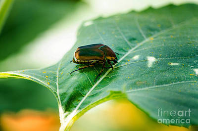 Photograph - June Bug by Paul Mashburn