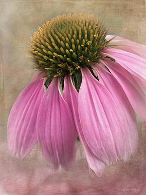 Artography Photograph - June Coneflower by Melissa Bittinger