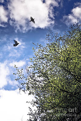 Photograph - June Freedom by Jan Bickerton