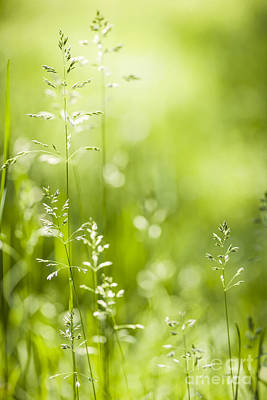 Botanic Photograph - June Green Grass  by Elena Elisseeva