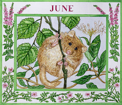 Rodent Wall Art - Photograph - June Wc On Paper by Catherine Bradbury