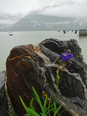Photograph - Juneau Iris by Jacqueline  DiAnne Wasson