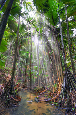 Photograph - Jungle by Alexey Stiop