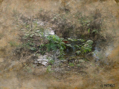 Photograph - Jungle Creek 2 by George Pedro