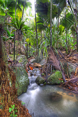 Photograph - Jungle Creek by Alexey Stiop