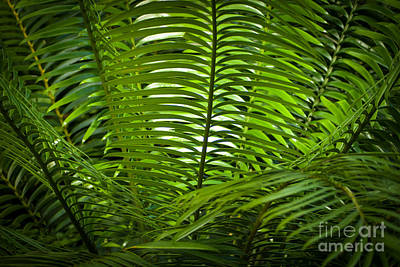 Jungle Fern Art Print
