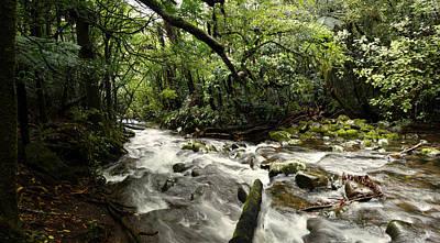 Jungle Flow Art Print by Les Cunliffe