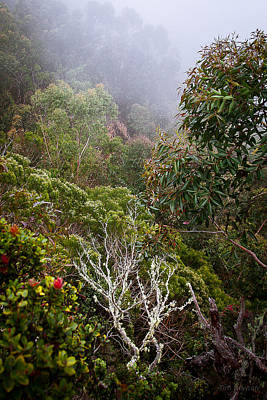Photograph - Jungle Foliage In Mist by Tim Newton