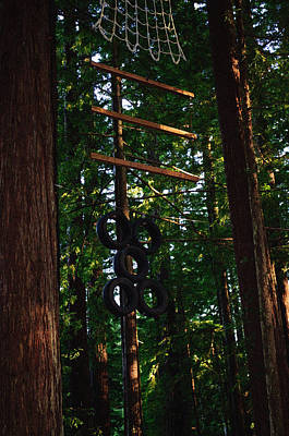 Photograph - Jungle Gym II by Tikvah's Hope