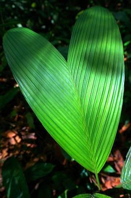 Jungle Heart Art Print