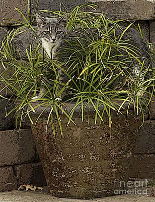 Jungle Kitty All Profits Go To Hospice Of The Calumet Area Art Print