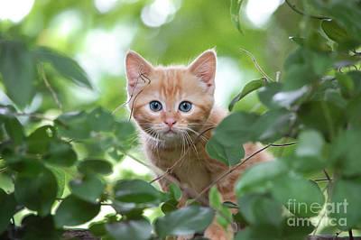 Jungle Kitty Art Print
