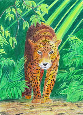Drawing - Jungle Leopard by Artistic Indian Nurse