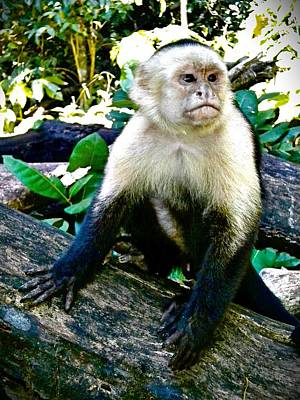 Open Impressionism California Desert Royalty Free Images - Jungle Monkey Royalty-Free Image by Joan Reese