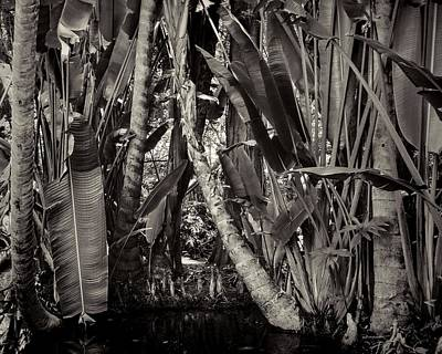 Photograph - Jungle by Rudy Umans
