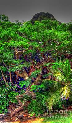 Photograph - Jungle Tree by Phillip Garcia