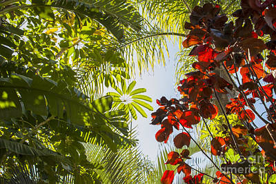 Sun Photograph - Jungle Tree Roof by Gry Thunes