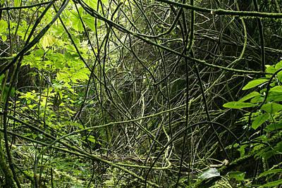 Jungle Vines Art Print by Les Cunliffe
