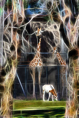 Photograph - Jungle Zoo by Miroslava Jurcik