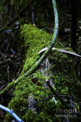 Pasta Al Dente - Jungles of Colombia by Cheryl Hurtak