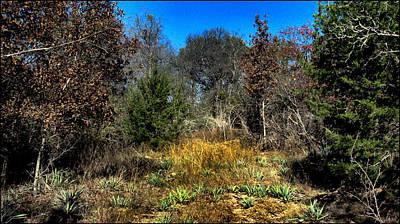 Photograph - Junglescape2 2009 by Glenn Bautista