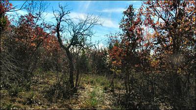 Photograph - Junglescape4 2009 by Glenn Bautista