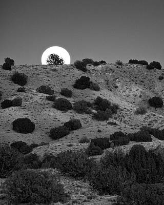 Photograph - Juniper At Moonrise by Mary Lee Dereske