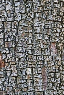 Art Print featuring the photograph Juniper Bark- Texture Collection by Tom Janca