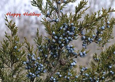 Photograph - Juniper Berries - Happy Holidays by Peggy King