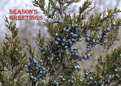 Photograph - Juniper Berries - Season's Greetings by Peggy King