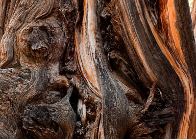 Photograph - Juniper Form  by Eric Rundle