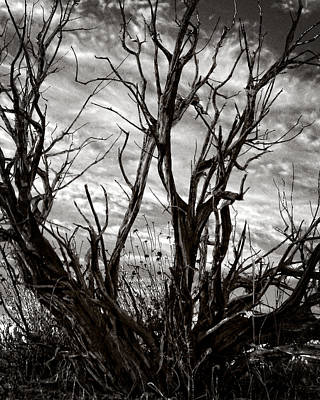 Photograph - Juniper In Drought by Timothy Bulone