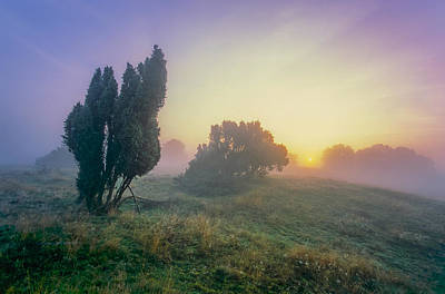 Photograph - Juniper Trees In Early Morning Fog  by Martin Liebermann