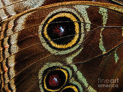 Photograph - Blue Morpho Butterfly Wing by Olga Hamilton