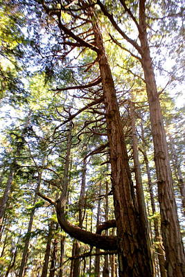 Hornby Island Photograph - Jurassic Trees by Brian Sereda
