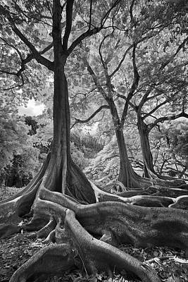 Photograph - Jurassic Trees In Infrared by Michael Yeager