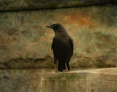 Crow Image Photograph - Just A Blackbird  by Gothicrow Images