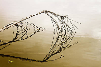 Lenz Wall Art - Photograph - Just A Branch by George Lenz