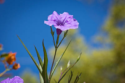Photograph - Just A Flower by Rollie Robles