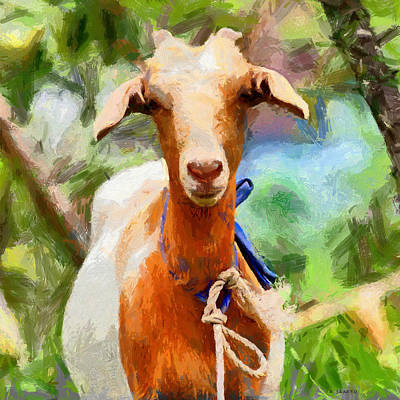 Just A Goat Art Print