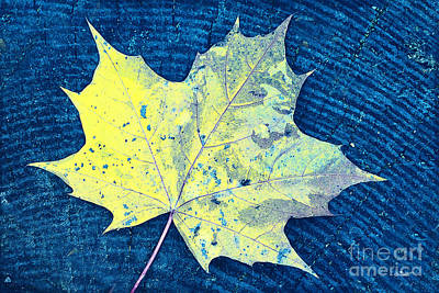 Photograph - Just A Leaf by Jutta Maria Pusl