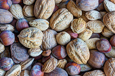 Photograph - Just A Little Nutty by Heidi Smith