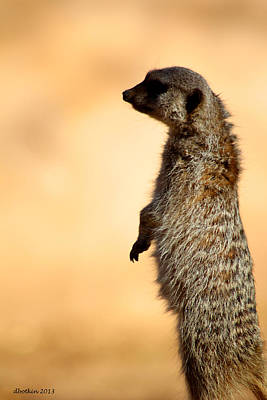 Just A Meerkat Art Print by Dick Botkin