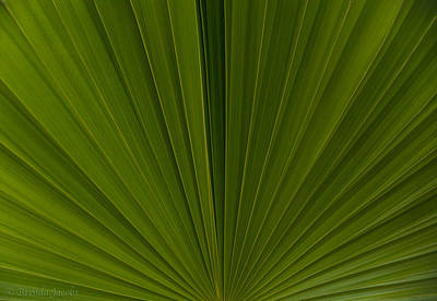 Photograph - Just A Palm by Brenda Jacobs