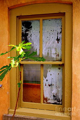 Photograph - Just A Peek In by Marcia Lee Jones