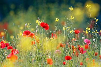 Fields Of Flowers Photograph - Just A Perfect Day by Roeselien Raimond
