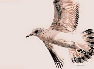 Flying Seagull Photograph - Just A Seagull by Deborah Benoit
